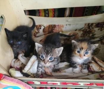 Отдам в добрые руки котиков - IMG_20190719_104427.jpg