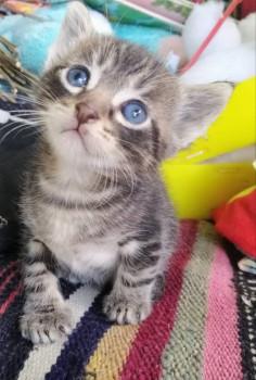 Котик, 1 мес - IMG_20190719_105128.jpg