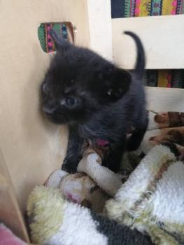 Котик, 1 мес - IMG_20190719_101806.jpg